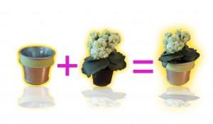 fête des mères plante et cache pot offert par l'UNICOM